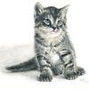 Tiere, Koloriert, Katze, Tierportrait