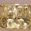 Retriever, Hund, Tierkinder, Welpe