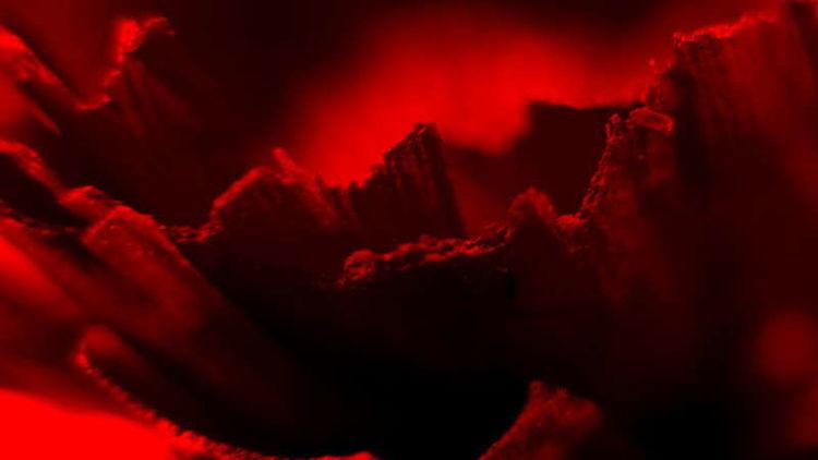 Abstrakt, Fotografie, Blumen, Schubertj73, Makro, Makrofotografie