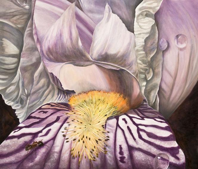 Makro, Tiermalerei, Ameise, Lila, Natur, Blumen