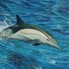 Wasser, Ozean, Tiere, Tierwelt