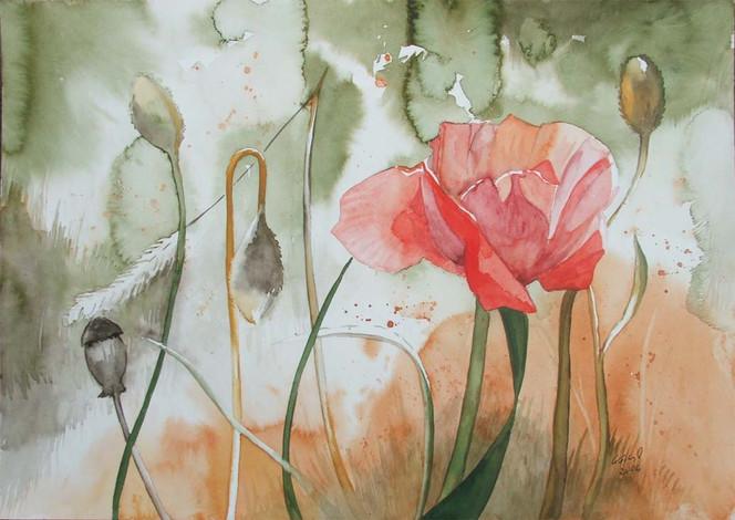 Blüte, Sommer, Vorpommern, Blumen, Mecklenburg, Aquarellmalerei