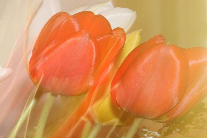 Blumen, Verwischen, Wischeffekt, Lichtmalerei, Blüte, Lightpainting