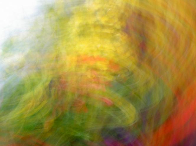 Wischeffekt, Lichtmalerei, Verwischen, Lightpainting, Malerei, Pflanzen