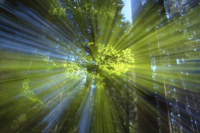 Wischeffekt, Lichtmalerei, Lightpainting, Wald, Licht, Verwischen