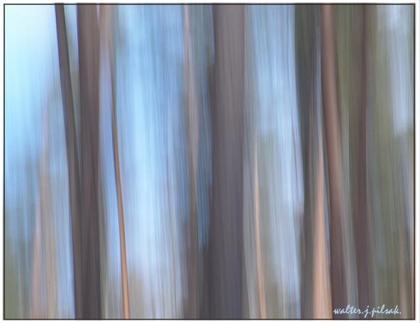 Lichtmalerei, Abstrakt, Wischeffekt, Fotografie, Wald,