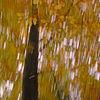Wischeffekt, Verwischen, Lichtmalerei, Baum