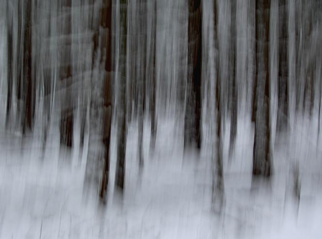 Fotografie, Wischeffekt, Schnee, Wald, Abstrakt, Lichtmalerei