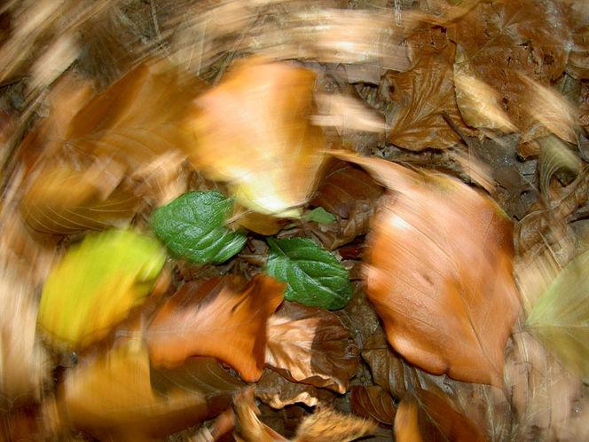 Wischeffekt, Herbstlaub, Lichtmalerei, Lightpainting, Herbst, Vergänglichkeit