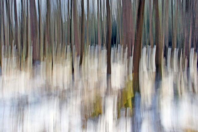 Wischeffekt, Lichtmalerei, Lightpainting, Wald, Winterende, Verwischen