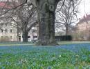Landschaft, Frühling, Blumen, Fotografie