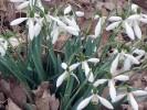 Fotografie, Frühling, Blumen, Landschaft