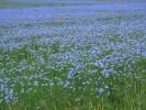 Landschaft, Fotografie, Blüte, Sommer