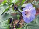 Sommer, Blüte, Landschaft, Fotografie