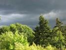 Baum, Landschaft, Regen, Fotografie