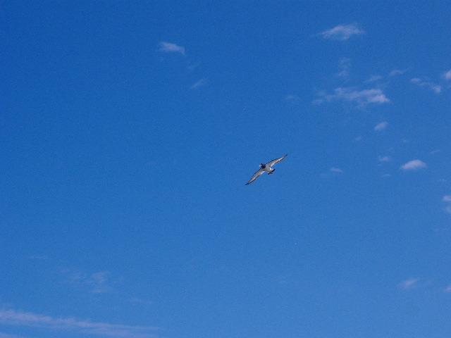 Vogel, Himmel, Blau, Fotografie, Tiere