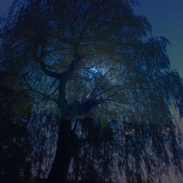 Mond, Baum, Nacht, Dunkel, Mischtechnik