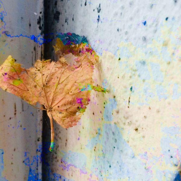 Blätter, Spalt, Farbtänzer, Wand, Mischtechnik, Stillleben