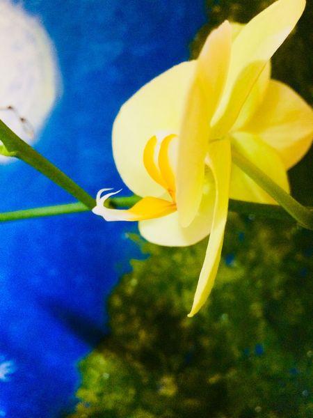 Orchidee, Schneckenprofil, Mondnacht, Perlenbaum, Mischtechnik