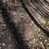 Schattenleiter, Laub der vergangenheit, Seelenrückholung, Fotografie