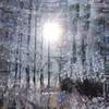 Zweig, Äste, Schnee, Baum