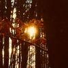 Blätter, Baum, Fotografie,