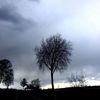 Wolken, Strauch, Abend, Baum