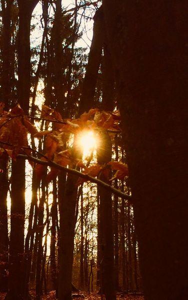 Baum, Blätter, Fotografie,