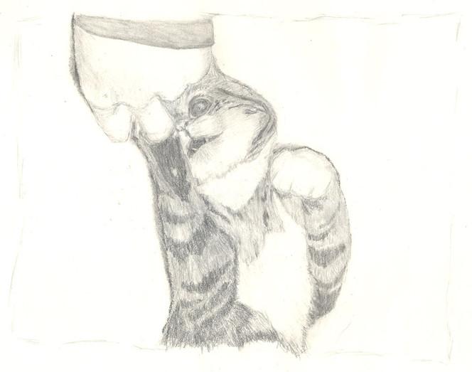 Katze, Tiere, Tierportrait, Zeichnung, Zeichnungen,