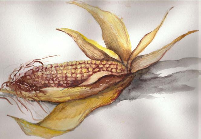 Stillleben, Skizze, Malerei, Mais, Gemüse, Früchte