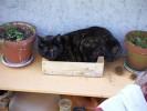 Pinnwand, Kiste, Katze