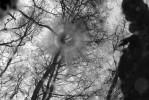 Fotografie, Regen, Pfütze, Wald