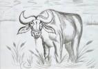 Tusche, Malerei, Tiere, Zeichnung