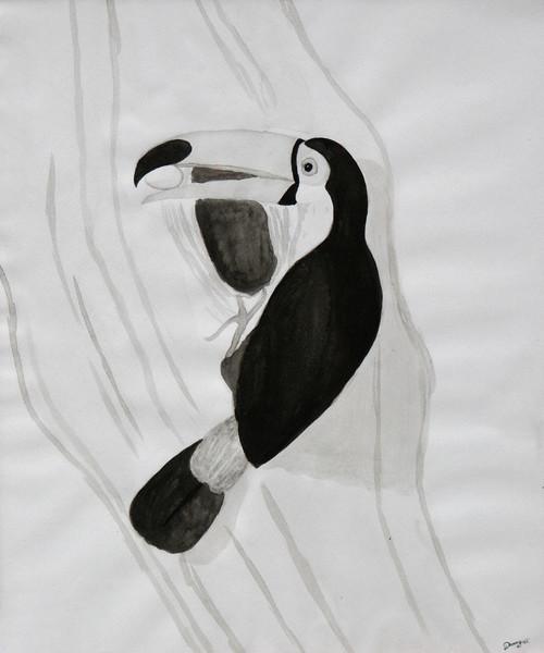 Tukan, Tiere, Vogel, Tuschmalerei, Zeichnung, Zeichnungen