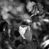 Schwarzweiß, Blätter, Gegenlicht, Fotografie