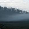 Feld, Nebel, Landstraße, Wald