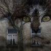 Winter, Katze, Baum, Augen