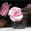 Ist eine rose, Ist ein rose, Eine rose, Fotografie