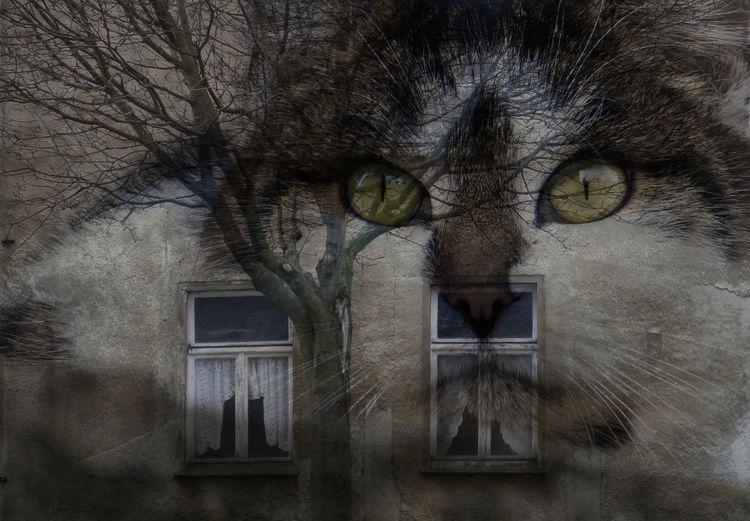 Verfall, Katze, Baum, Winter, Fassade, Altes haus