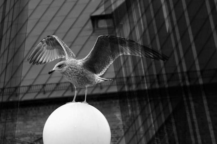 Fenster, Möwe, Schwarzweiß, Landung, Dach, Fotografie