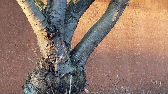 Baum, Stimmung, Licht, Schatten, Fotografie, Bodenschätze