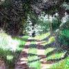 Weg, Natur, Wald, Licht und schatten