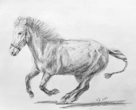 Realismus, Tiere, Galopp, Skizze, Reiten, Zeichnung