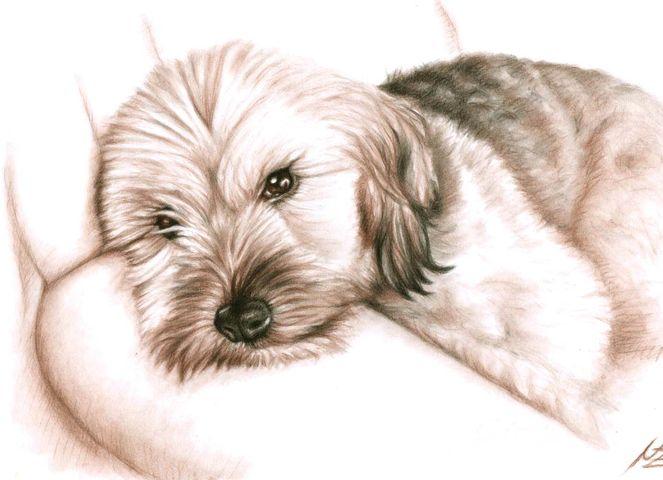 Zeichnung, Portrait, Kohlezeichnung, Fell, Augen, Auftrag