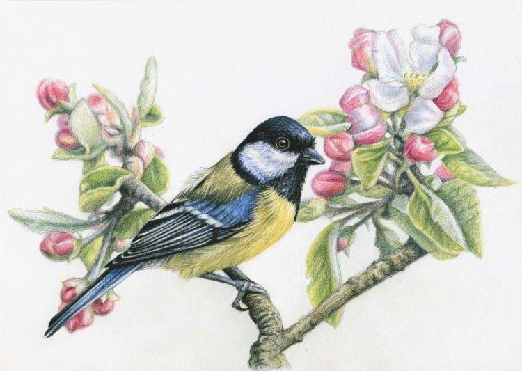Meise, Polychromos, Zeichnung, Vogel, Tiere, Portrait