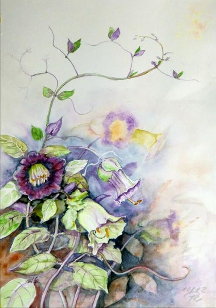 Blumen, Glockenrebe, Aquarell