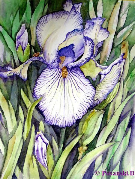 Schwerlilie, Blumen, Aquarell, Aquarelle blumen, Iris