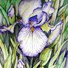 Schwerlilie, Blumen, Aquarell, Aquarelle blumen