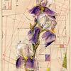 Schwertlilie, Zeichnung, Schnittmuster, Zeichnungen