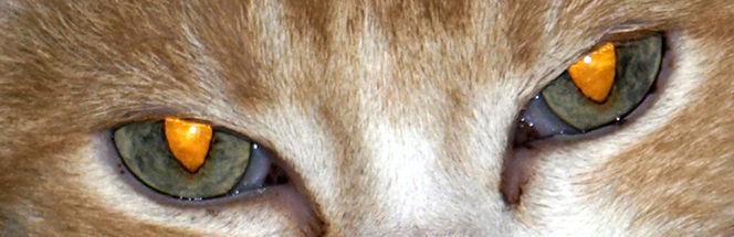 Katze, Augen, Blick, Fotografie, Augenblicke